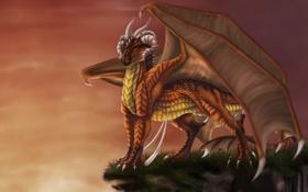 Обои небо, взгляд, скала, фантастика, дракон, крылья, арт