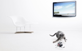 Обои кот, клубок, провода, кресло, экран, изображение