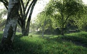 Обои лес, береза, заросли, трава, деревья