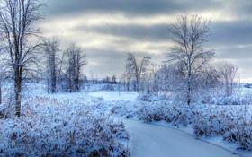 Обои лед, зима, небо, облака, снег, деревья, тучи