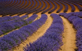 Обои поле, природа, field, nature, лаванда, lavender