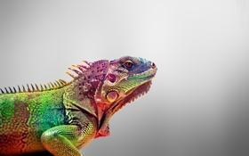Обои iguana, ящерица, animals, Игауна, цвета