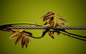 Картинка листья, макро, зеленый, фото, фон, стебли, обои