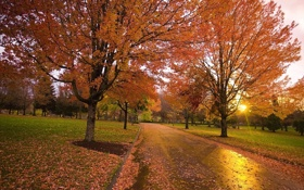 Картинка дорога, осень, закат, парк, Природа, аллея