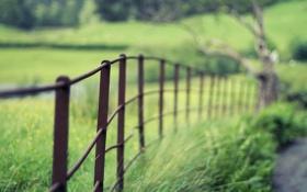 Обои дорога, макро, забор