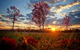 Обои осень, трава, солнце