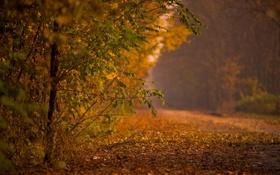 Обои листья, осень, парк, деревья