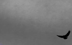 Обои серый, фон, минимализм, Ворон, reve