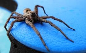 Обои макро, природа, паук, насекомое