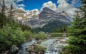 Обои ледник, камни, река, скалы, лес, ели, кусты