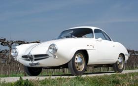 Обои белый, небо, 1960, Alfa Romeo, классика, передок, Speciale