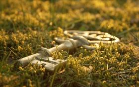 Обои травка, обои, фото, фон, зелень, ключ, макро