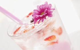 Обои цветок, коктейль, напиток