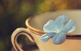 Обои цветок, лепестки, голубые, кружка, боке