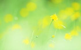 Обои макро, цветы, легкость, растения, весна, желтые, размытость