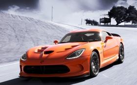 Обои SRT, обои, автомобиль, Viper, скорость, Dodge