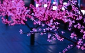Картинка розовый, ветки, лампочки, свет, огоньки, дерево