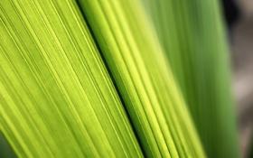 Картинка фото, зелёный, листки, green macro wallpapers, макро листья