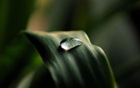 Картинка трава, фото, растение, капля, листик, обои, природа