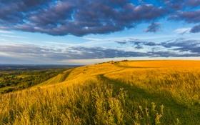 Обои поле, небо, трава, облака, пейзаж, цветы, природа