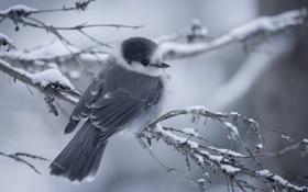 Картинка природа, фон, дерево, птица, ветка