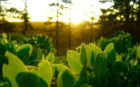 Обои зелень, свет, листики