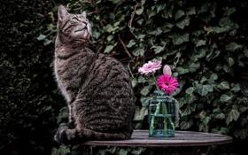 Обои кот, кошка, столик, цветы
