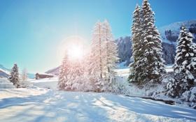 Обои хижина, снег, зима, деревья