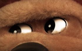 Обои глаза, морда, мягкая игрушка