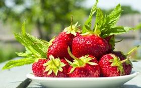 Обои ягоды, клубника, fresh berries, strawberry, миска