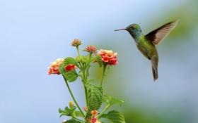Картинка листья, цветы, птица, колибри