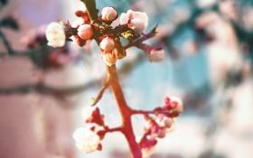 Картинка листья, цветы, ветки, природа, Макро, растения, весна