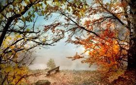 Картинка осень, скамейка, туман, парк