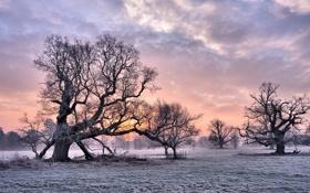 Картинка зима, закат, дерево