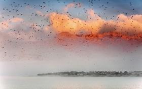 Картинка облака, закат, птицы, Горы
