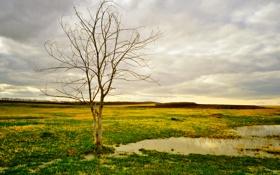 Обои грусть, осень, небо, трава, облака, лужа