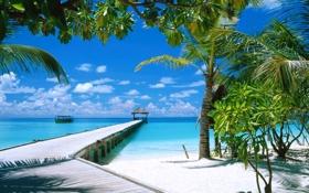 Картинка песок, море, пляж, небо, облака, пальмы, отдых