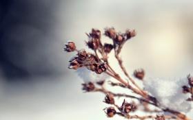 Обои иней, макро, снег, природа, растение, ветка