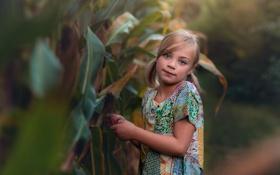 Обои девочка, прелесть, боке, Lorna Oxenham, In the corn