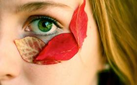 Обои листья, девушка, макро