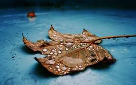Обои капли, краска, листок, синяя, кленовый