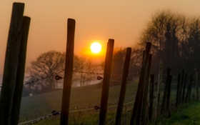 Картинка туман, восход, забор, фермы деревья
