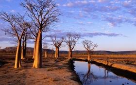Картинка Australia, on Kimberley Plateau, Boab Trees