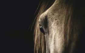 Обои конь, морда, макро