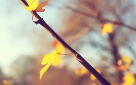 Картинка осень, листья, свет, ветки, autumn, leaves, macro