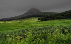Обои трава, пейзаж, гора