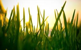 Обои небо, трава, макро, свет, природа, фото, обои для рабочего стола