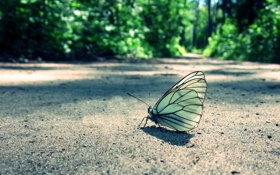 Обои лес, бабочка, трава