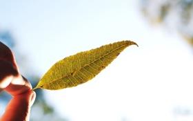 Обои фото, растение, настроение, листик, обои, день, картинка