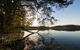 Обои лес, небо, вода, деревья, пейзаж, природа, озеро